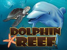 Игровой аппарат Риф Дельфина
